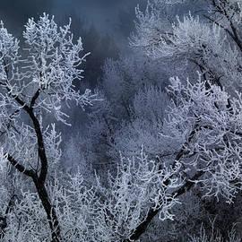 Leland D Howard - Winter Frost