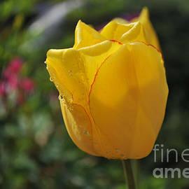 Elaine Mikkelstrup - Yellow Tulip