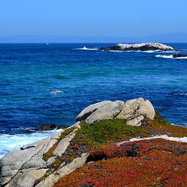 17 Mile Drive  Monterey California by Dean Ferreira
