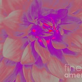 Dora Sofia Caputo Photographic Design and Fine Art - A Touch of Purple - Pop Art