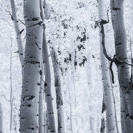Aspen by David Waldrop