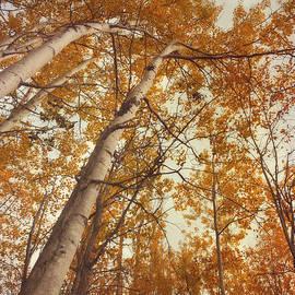Priska Wettstein - Autumn Aspens