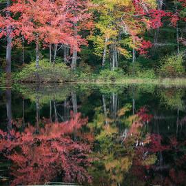 Autumn Pond by Bill Wakeley