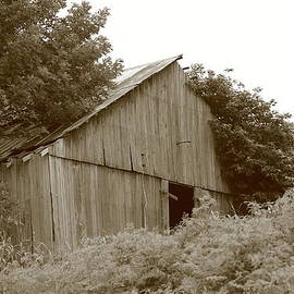 Barn In The Weeds by Dwight Cook