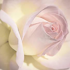 Blushing Petals by Julie Palencia