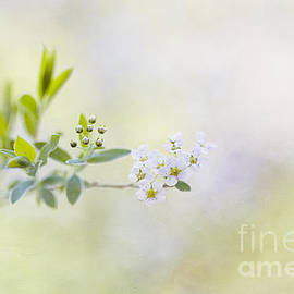 Breath of spring by Maria Ismanah Schulze-Vorberg
