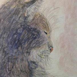 Cat Nap by Angela Davies