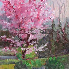 Cherry Tree by Judy Fischer Walton