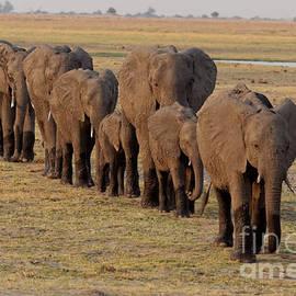 Elephant Family by Mareko Marciniak