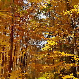 Andrea Kollo - Golden Autumn