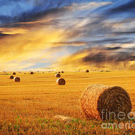 Golden sunset over farm field with hay bales by Elena Elisseeva