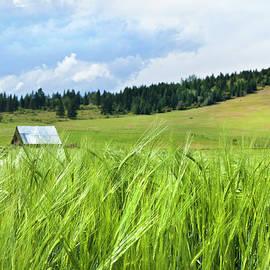 Theresa Tahara - How Green Was My Valley