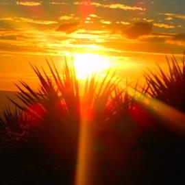 James Welch - Mohave Desert Sunset