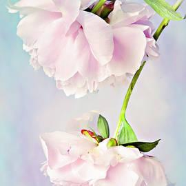 Pastel Peonies by Theresa Tahara
