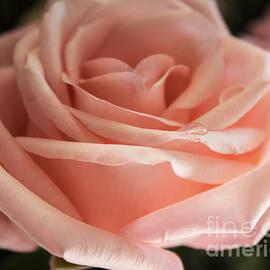 Arlene Carmel - Perfectly Peachy