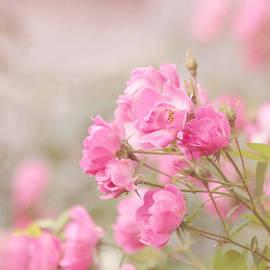 Pastel Pinks by Kim Hojnacki