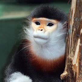 Portrait Of A Monkey by Trina  Ansel