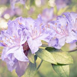 Purple Rhododendron Sparkles by Priya Ghose