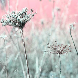 Queen Anne's Lace by Bonnie Bruno