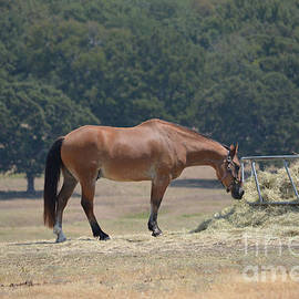 Horse Ready to Eat by Ruth  Housley