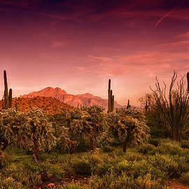 Sonoran Desert Sunset by Saija  Lehtonen