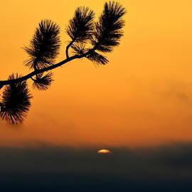 Sunset At Yosemite by Rima Biswas
