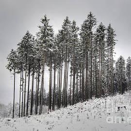 Michal Boubin - Trees In Winter
