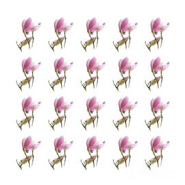 20 Pink Magnolias by Andee Design