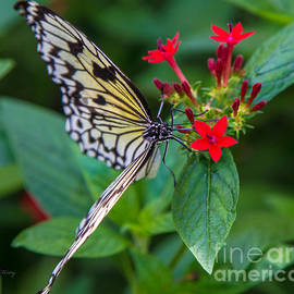 Rene Triay Photography - Butterfly