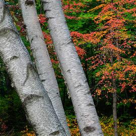 Gunther Schabestiel - 3 Birch Trees
