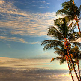Coconut Palms by Kelly Wade