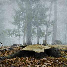 Trish Tritz - Foggy Forest