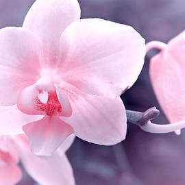 Pink orchid  by Lali Kacharava