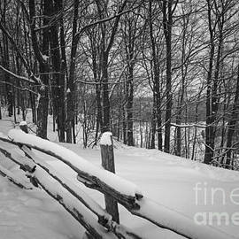 Rural winter scene with fence 2 by Elena Elisseeva