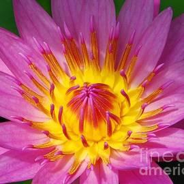 Allen Beatty - Water Lily 1