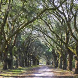 Allee Of Oaks Road by Dale Powell
