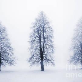 Elena Elisseeva - Winter trees in fog