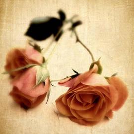 Jessica Jenney - Vintage Rose