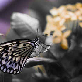 Bradley R Youngberg - Butterfly