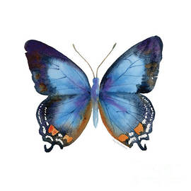 80 Imperial Blue Butterfly by Amy Kirkpatrick