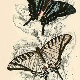 English School - Butterflies
