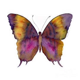 99 Marcella Daggerwing Butterfly by Amy Kirkpatrick