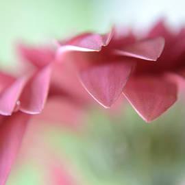 A Beautiful Whisper by Melanie Moraga
