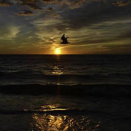A Bird in Paradise by Debra Bowers