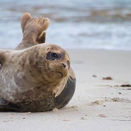 Ruth Jolly - Seal day in the Sun