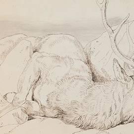 Sir Edwin Landseer - A Dead Stag