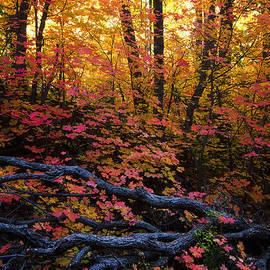 Saija  Lehtonen - A Fall Forest