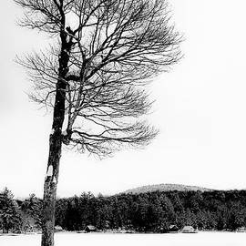 A Frigid Day on Old Forge Pond by David Patterson