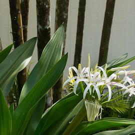 Georgia Mizuleva - A Garden Like an Ikebana Flower Arrangement
