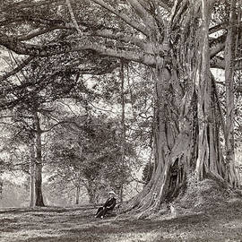 Scowen and Co - A gentleman sitting beneath a large native tree in British Ceylon